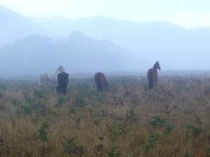 Morning Mist at Keebles Hut