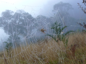 Morning Dew at Keebles Hut